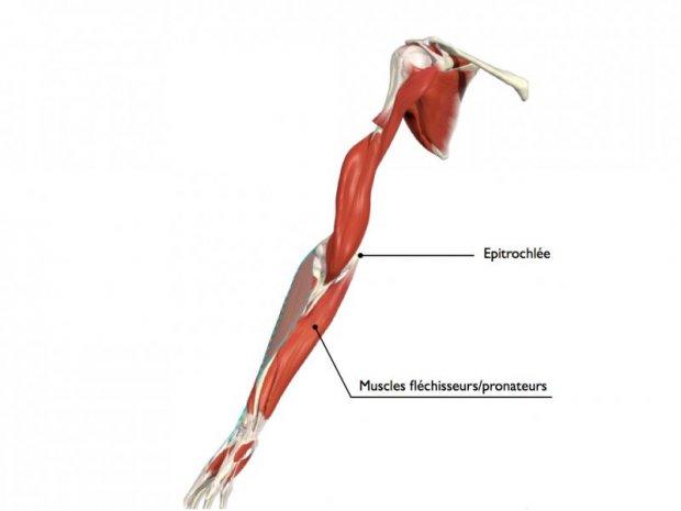 Epitrochl 233 Ite Www Hand Surgery Eu