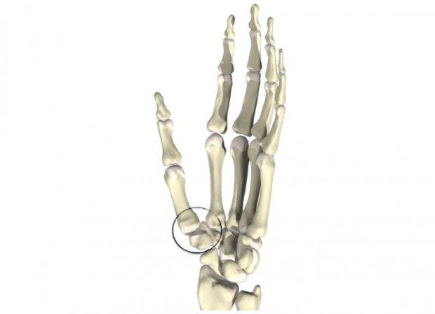 Articulation trapézométacarpienne ou articulation en selle de la base du pouce