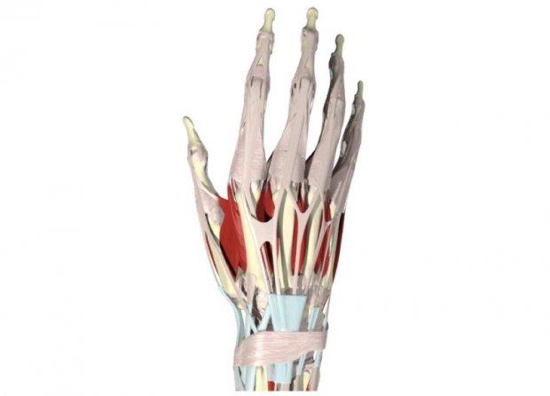 Extensor Tendon Injuries Hand Surgery
